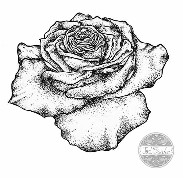 fleur dessin tatouage rose   kolorisse developpement